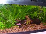 20 Gallon Freshwater Tank (left angle
