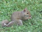 My little garden squirrel