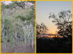 Bushland during dry season and Sunrise
