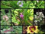 Mid-Spring Blooms In The Tiered Garden Beds