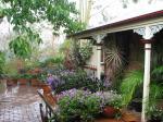 Courtyard Garden - end of Spring