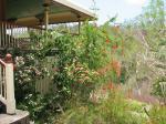 Front garden beds after house repair work