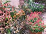 Courtyard Garden plants at the end of Spring