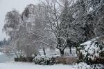 Backyard in ice/snowstorm