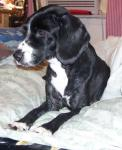 Stormy - died 8-22-2012