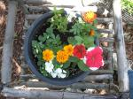 marigolds,petunia,impatiens