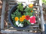 marigolds,petunia,impatiens