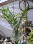 lg plant