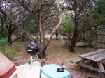 More of the back yard