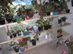 new shelves for plants