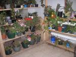 My plant room